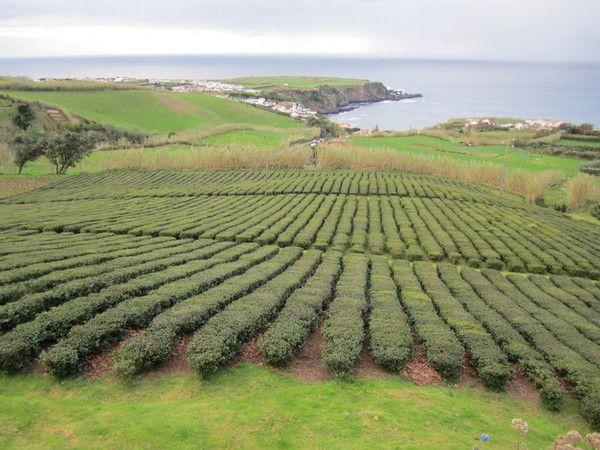Conseils de plantation de haie centerblog for Conseil plantation jardin